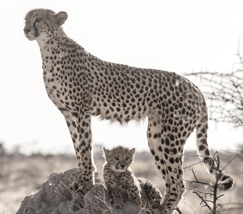 Sambia Luangwa Valley @Kalahari Afrika Spezial Safaris Dresden